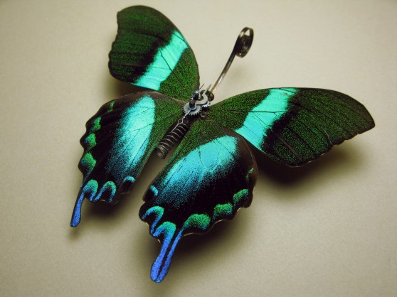 Steampunk butterfly from Insect Labs